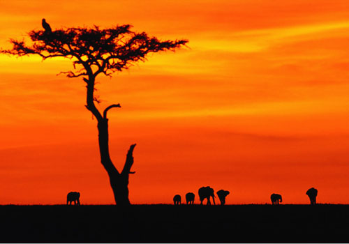 F d ralismes africains le taurillon magazine eurocitoyen - L heure du coucher du soleil aujourd hui ...