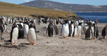 The most remote places of the EU: Falkland Islands